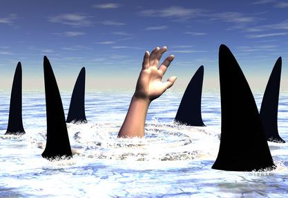 omringd door haaien